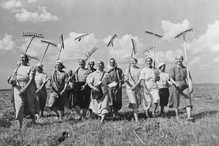 Фотоснимки из СССР: сбор урожая коллективно и весело.
