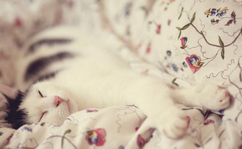 Без кота и жизнь не та: как все изменится, если в доме появится мурлыка