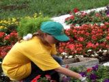 После того, как мой сын женился, на месте огорода появился цветник, а между участками — забор!