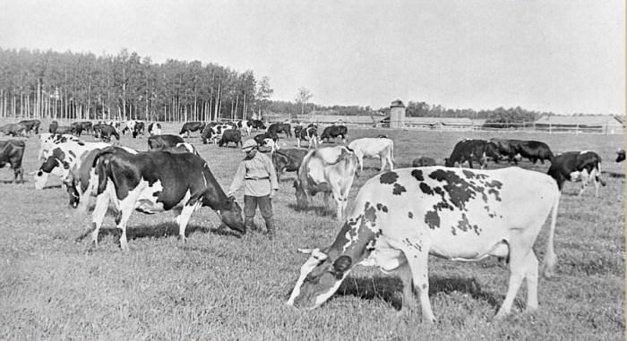 Нужно ли возвращать колхозы