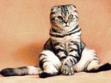 Кот с вредной привычкой