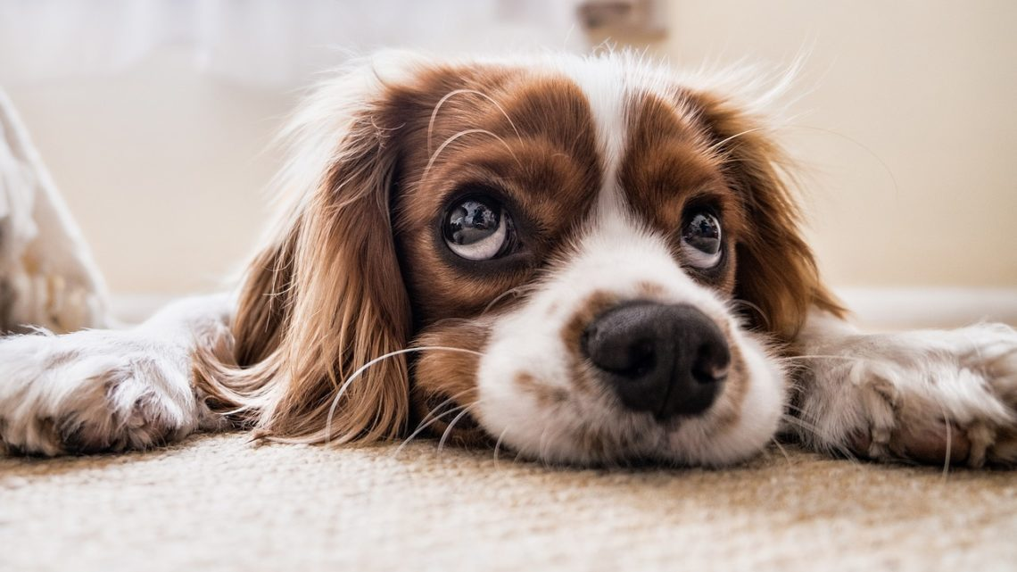 Какую породу собак лучше выбрать? 6 самых добрых пород