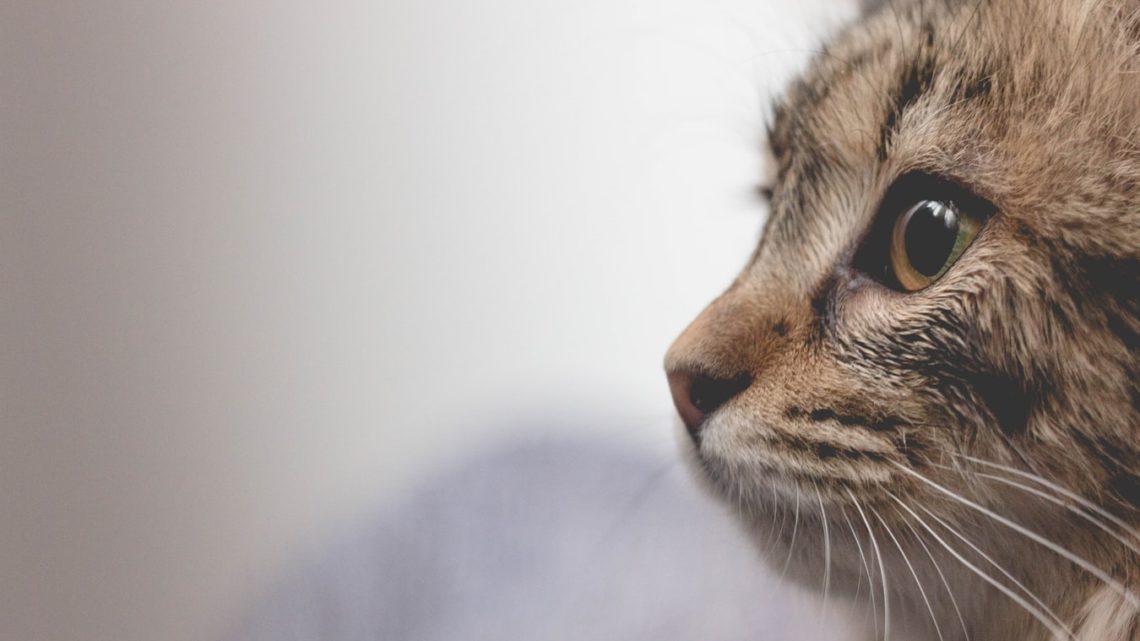 В кафе долго подкармливали кошку, а потом повесили записку на ее ошейник