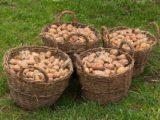 Иностранец так и не понял, зачем русские сажают картошку