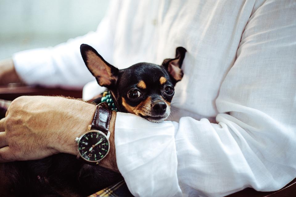 Собака дороже внука